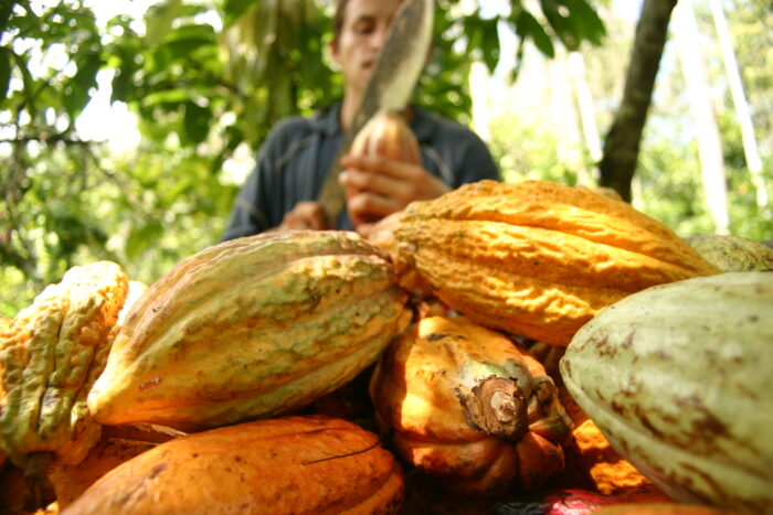 Cacao-San-Vicente-700x467